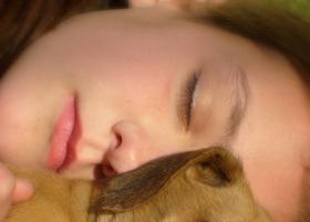 Quali sono gli animali domestici terapeutici