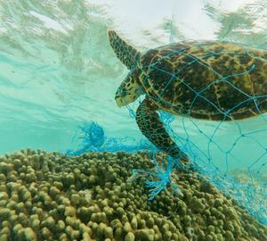 Inquinamento oceani: le 10 cose che puoi fare per salvarli