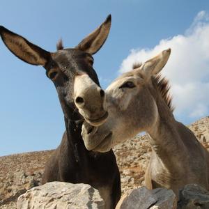 Creature innamorate