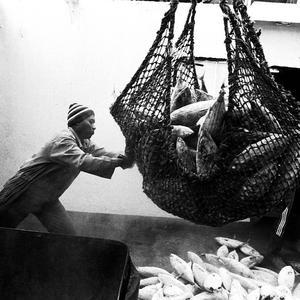 Un mondo di pesce a Port Muara Baru