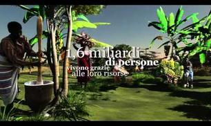 2011: Anno Internazionale delle Foreste
