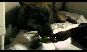 Chi dice che il lupo è cattivo?
