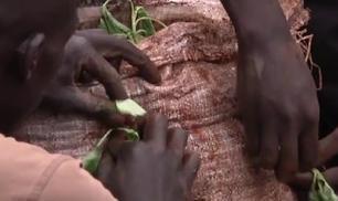 Da Nairobi un nuovo sistema di coltivazione