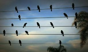 La natura tradotta in musica
