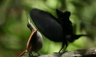 Bird of Paradise Project