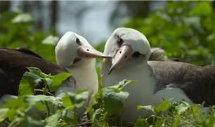 Midway: L'isola degli albatross