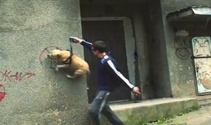 Che Parkour …da cani!