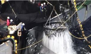 FAD metodi di pesca NON sostenibile