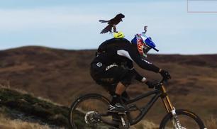 La sfida tra biker e falco pellegrino