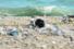Anche le Tremiti vietano l'uso delle stoviglie in plastica
