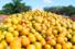 Produrre cibo aumenta lo spreco e le emissioni di gas serra