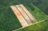 Come l'agricoltura intensiva contribuisce alla deforestazione
