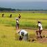 farmers-of-bangladesh