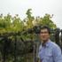 La riscoperta delle viti antiche si fa green