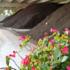 Biowaste, risorsa e pilastro dell'economia circolare