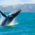 «Le microplastiche nei mari impattano sulla catena alimentare»