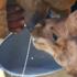 Il latte di cammello, così ricco di vitamine e con pochi grassi