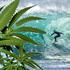 Dall'alimentazione al surf, i mille usi green della canapa