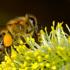 I paladini delle api, a tutela degli alveari e del Pianeta