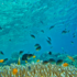 A causa del cambiamento climatico diminuiscono i pesci