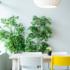 Ikea e la second life dei mobili all'insegna dell'economia circolare