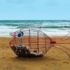 I pesci mangia-plastica invadono le spiagge italiane