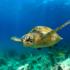 Tartarughe del Mediterraneo a rischio estinzione anche a causa della plastica