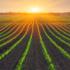L'agricoltura biologica non è la soluzione a tutti i mali del Pianeta