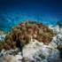 Cambiamenti climatici: le spugne di mare aiutano a ridurre la CO2