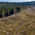 In Romania il taglio illegale dei boschi minaccia l'ecosistema
