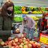 Dal supermercato al frigo, la spesa a prova di Coronavirus