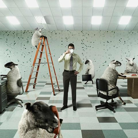 Businessman in Office with Sheep Co-workers, phot by CJ Burton/Corbis