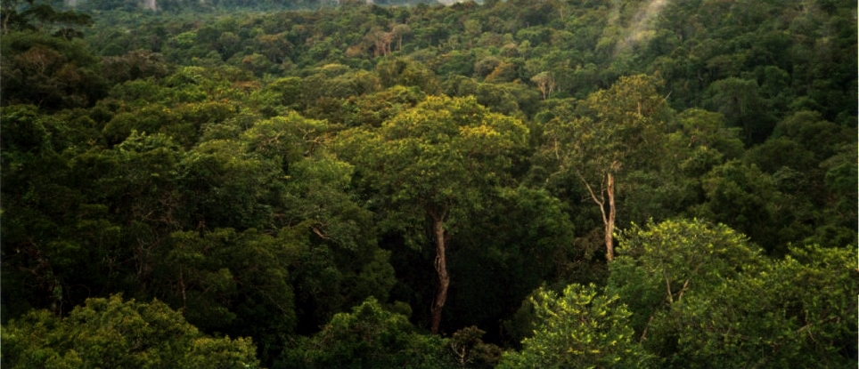 View of Amazon basin forest north of Manaus, photo by Phil P Harris