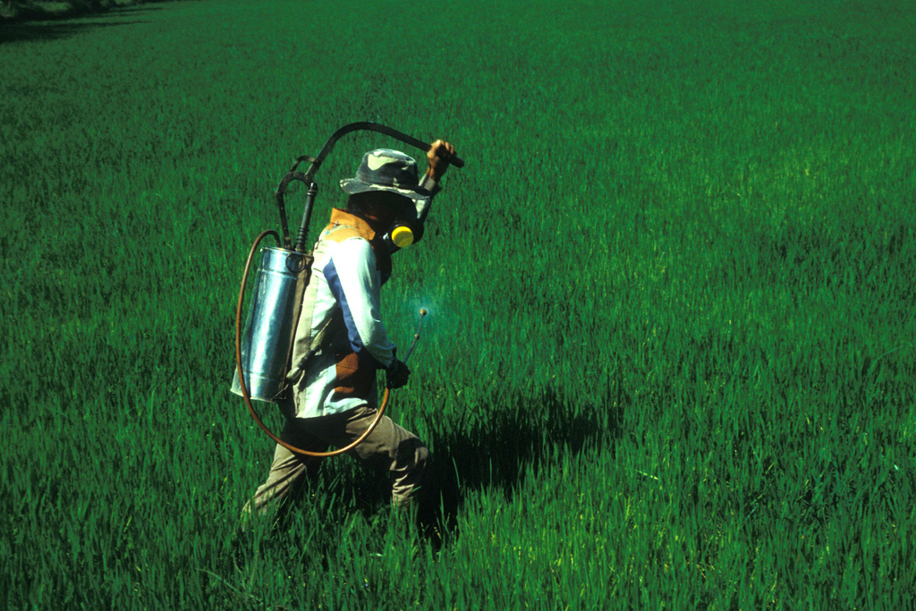 Spraying rice field at tillering stage. Part of the image collection of the International Rice Research Institute, album di IRRI Images/flickr