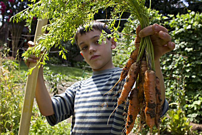 Boy holding bunch carrots, album di woodleywonderworks/flickr