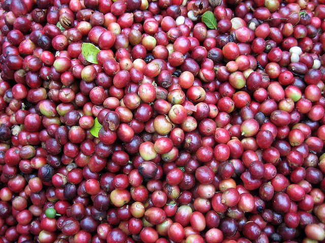Bolaven Plateau harvested coffee beans, album di Prince Roy/flickr