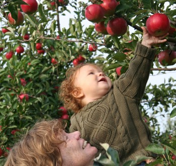 Apple picking 2006, album di Tim & Selena Middleton/flickr