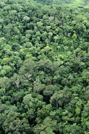 Amazon Jungle, Image by Ocean/Corbis