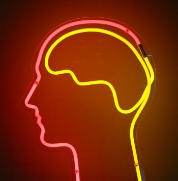 Brain, album di dierk schaefer/flickr