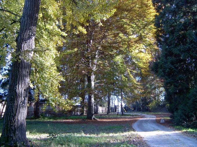 Intervento in giardino storico, Cuneo