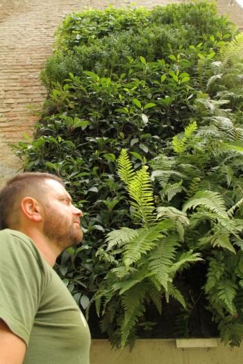Matteo Ferrario, un esempio di giardino verticale nella sua casa di Giussano (Monza e Brianza), fot di Sara Donati