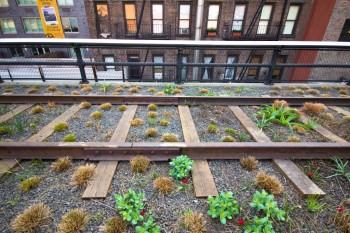 verde urbano Renfro parco urbano orti urbani High Line Diller Scofidio biodiversità