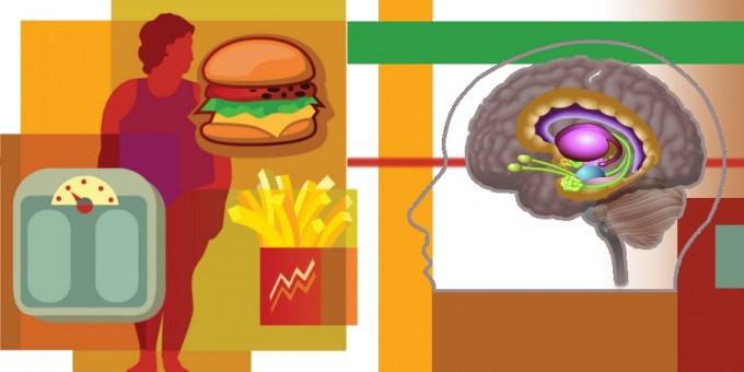 Le strutture cerebrali del sitema limbico implicate nei processi emotivi e comportamentali, e coinvolte anche nei fenomeni di dipendenza. Crediti: ImageZoo/Corbis