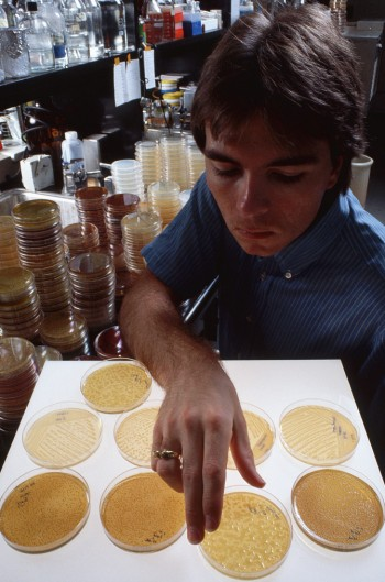 July 1983, Chicago, Illinois - Dr. Al Darzins Studying Genetic Clues for Cystic Fibrosis - Image by © Ted Spiegel/CORBIS