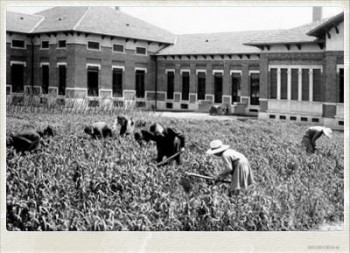"""Immagine d'epoca, """"La coltivazione"""""""