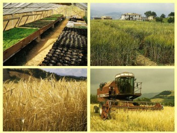 Penne e l'agricoltura biologica