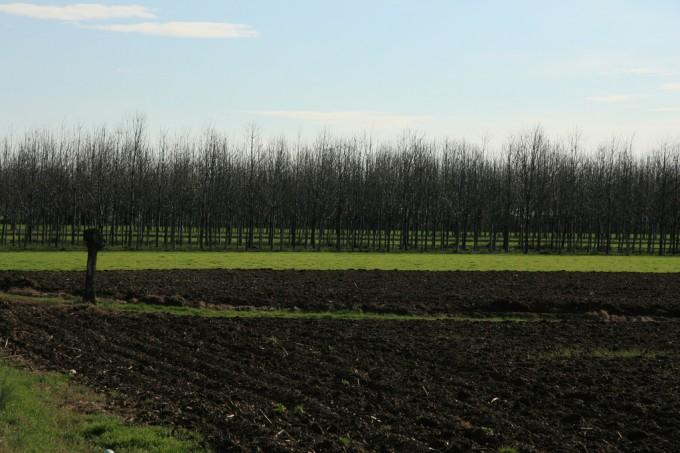 Agricoltura biologica. Foto di Malex.org/flickr