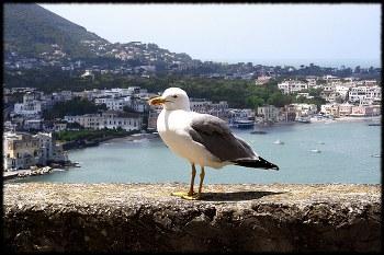 foto di Enrico Bubboli/flickr