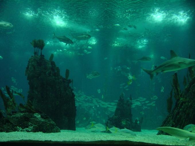 Oceano Foto di Allie Caulfield/flickr