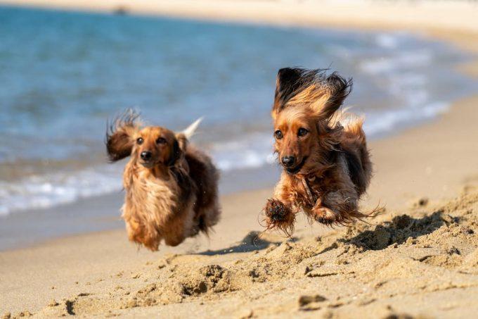Cani in vacanza: la spiaggia